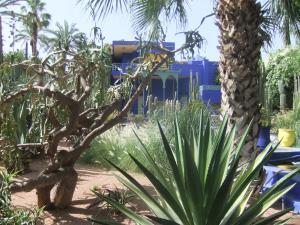 Majorelle garden plants
