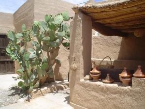 Tajin & cactus