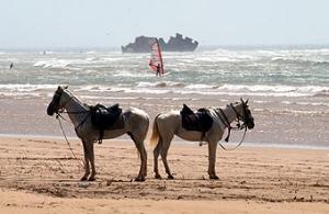 Oualidia Horses